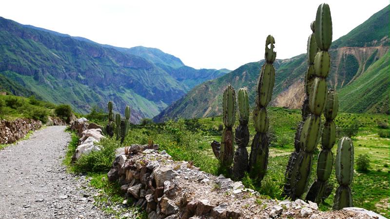 Trekking Arequipa – Colca Canyon <span>3D/2N</span>