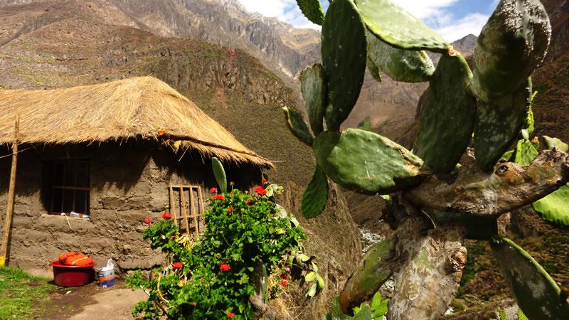 Trekking: Puno – Colca canyon – Oasis – Arequipa or Puno <span>4D/3N</span>